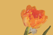 Die orange Tulpe ( digitale Kunst)
